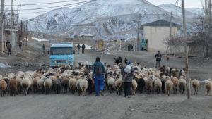 9 village Baman